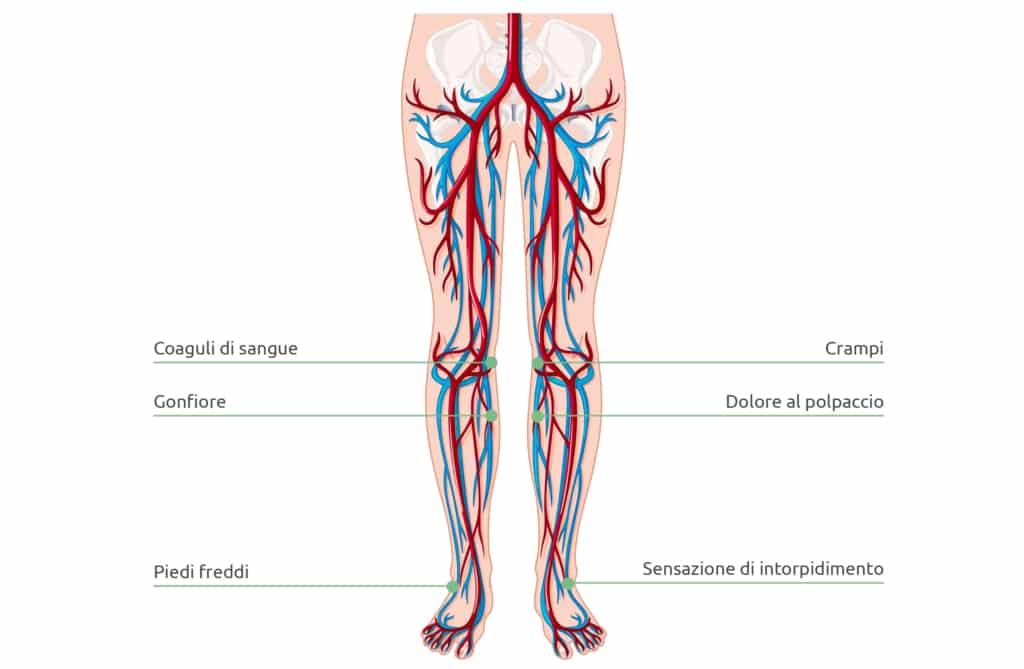 La circolazione del sangue è importante per tutto il corpo perché fornisce a tutti gli organi e gli arti ossigeno in quantità sufficienti.